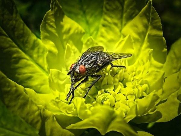 C mo eliminar las moscas de la casa con recetas caseras - Como sacar las moscas de la casa ...