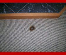 Reparar alfombras. Quemaduras de cigarrillo