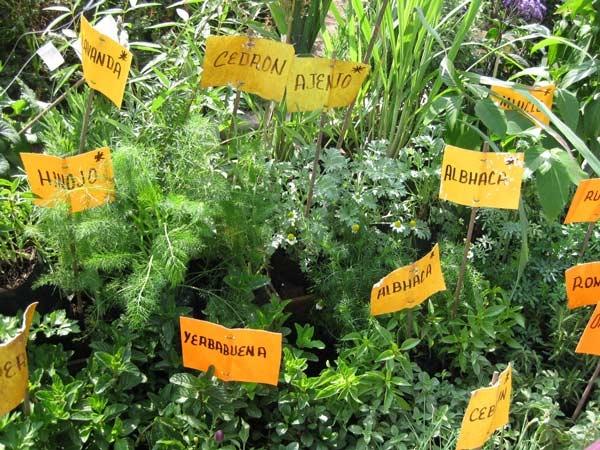 hierbas-aromaticas-como-cultivarlas