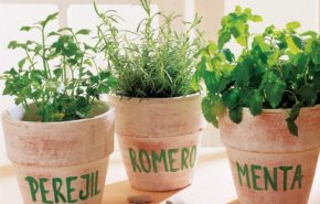 Hierbas y plantas aromáticas y medicinales para casa