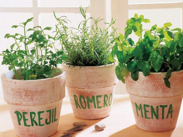 plantas-aromaticas-usos
