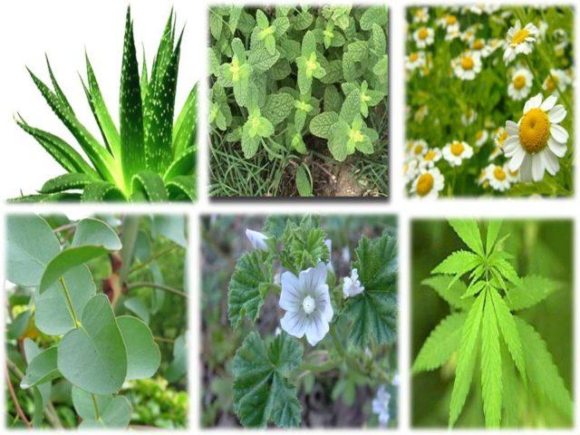 plantas-medicinales-consejos