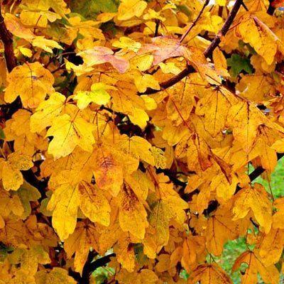 hojas-amarillas