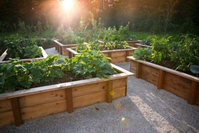 jardn rstico para un patio con plantas colocadas en madera