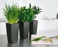 lechuza-modern-self-watering-planters-4