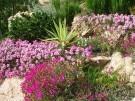 Decoración de jardines   Cuidado de plantas