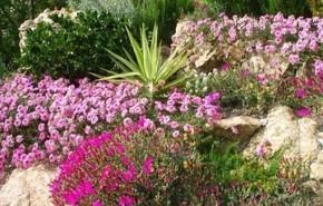 Decoración de jardines | Cuidado de plantas