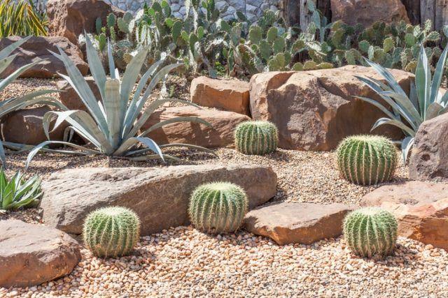 Ideas para la decoracion con piedras rocalla cactus desierto