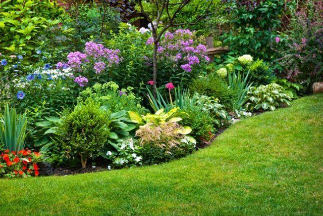 Rocallas con plantas vivaces vegetacion abundante
