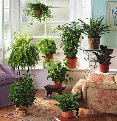 Plantas ornamentales 1
