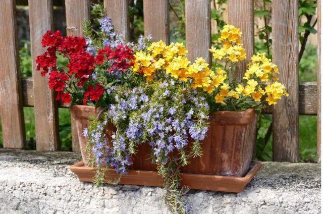 Tipos de plantas ornamentales de interior y de exterior for Plantas decorativas ornamentales