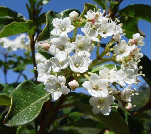 Tipos de plantas ornamentales de interior y de exterior for Clases de plantas ornamentales