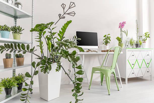 Tipos de plantas ornamentales de interior y de exterior cu l es su cuidado - Plantas decorativas interior ...