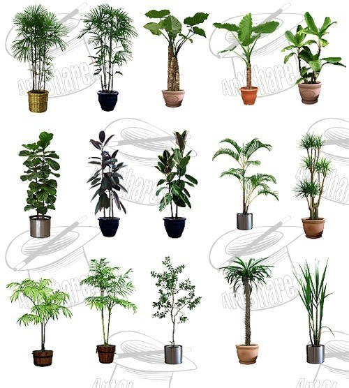 De Plantas Ornamentales Related Keywords & Suggestions  Tipos De