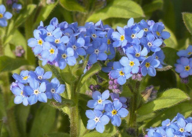 El Significado De Las Flores Cual Es El Significado De Cada Flor