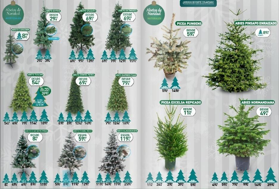 d959471448521 Abeto Navidad Natural Picea Excelsa Enraizada Verdecora - Verdecora ...