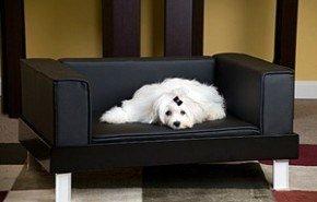 Sofas y perros