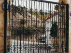 puertas de hierro forjado5
