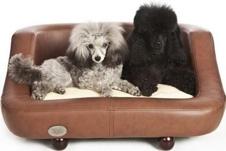 richmond tan poodle