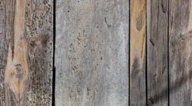 Cómo Eliminar Carcoma de los muebles: Tratamientos contra los insectos de la madera