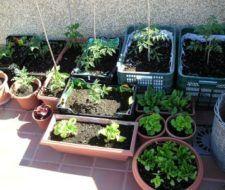 El huerto ecológico en casa
