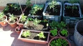 Cómo hacer un huerto ecológico en casa