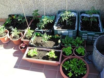 Si en casa tienes un jardín o terraza, puedes disfrutar de una alimentación más sana poniendo en marcha tu propio huerto ecológico