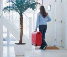 Trucos para regar las plantas en vacaciones