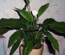 Las plantas que mejor filtran el aire en tu casa, según la NASA