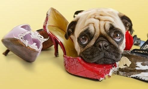 evitar-perro-muerda-muebles-objetos-cuando-estas-en-casa