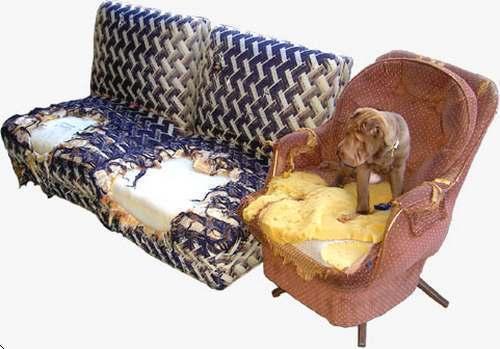 evitar-perro-muerda-muebles-objetos-cuando-estas-fuera-de-casa