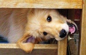 Ideas y consejos para evitar que tu perro muerda los muebles de casa