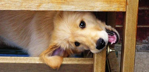 ideas-consejos-evitar-perro-cachorro-muerda-muebles-casa