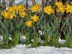 decoración-jardines-exteriores-2014-jardin-invierno