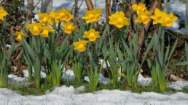 Ideas para decorar el jardin for Decoracion de interiores jardines de invierno
