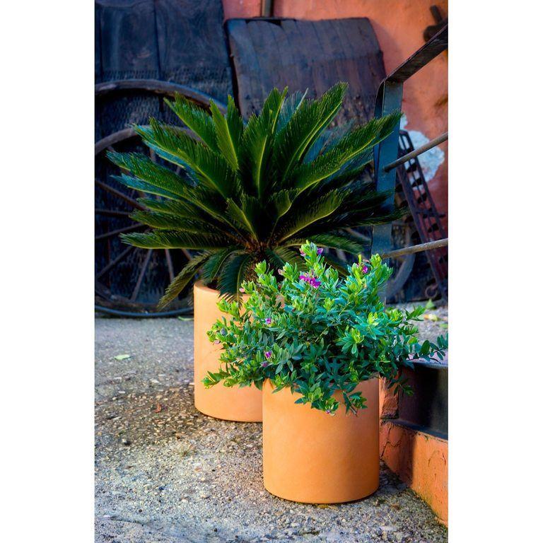 M s de 100 fotos de decoraci n de jardines ideas para for Que plantas poner en una jardinera