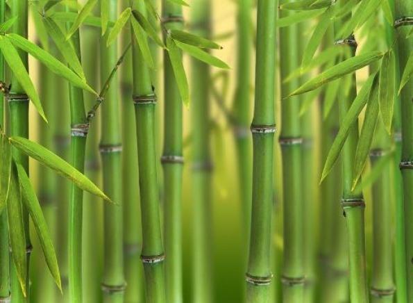 bambu-material-de-estas-alfombras