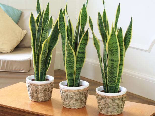 Plantas de interior fotos plantas para el salon - Plantas para el salon ...