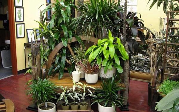 plantas-de-interior-TIPOS