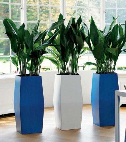 plantas-de-interior-TIPOS-Aspidistra