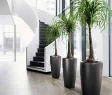 Plantas de Interior – Tipos, cuidados y fotos