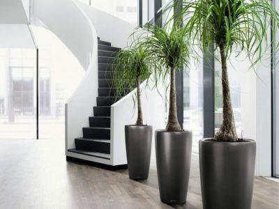 Plantas de Interior - Tipos, cuidados y fotos