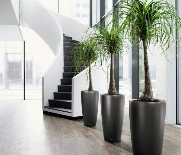 Plantas de Interior - Tipos, cuidados y fotos - EspacioHogar.com