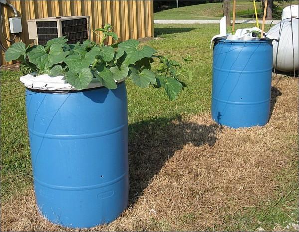 video-como-construir-un-jardin-de-macetas-auto-riego-en-un-barril-plantas-conservadas