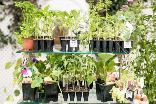 como plantar con plantones