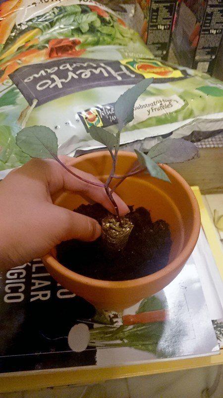 como_plantar