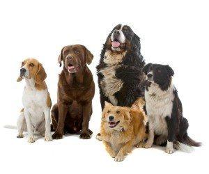 ¿Tienes mascotas en casa? Dog Chow