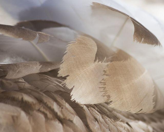 edredones-de-relleno-natural