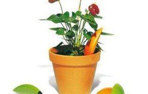 Apache, dispositivo para regar las plantas