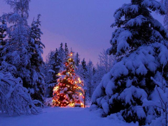 fotos-de-navidad-paisaje-arbol